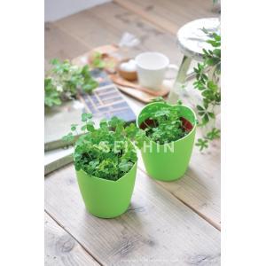 プレゼント ギフト きっとみつかる四つ葉のクローバー栽培セット 聖新陶芸|arune