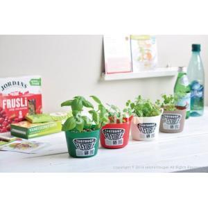 タブグリーン TUB GREEN タブトラッグスで育てるハーブ栽培セット 観葉植物 ガーデニング 聖新陶芸 ギフト プレゼント 景品|arune