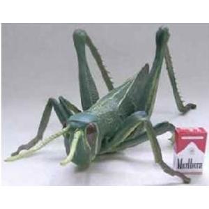 メガバッタ 巨大生物標本シリーズ|arune