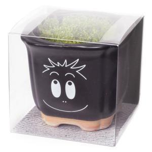 バーバパパ 苔盆栽 バーバモジャ 観葉植物 ガーデニング 聖新陶芸 ギフト プレゼント 景品|arune