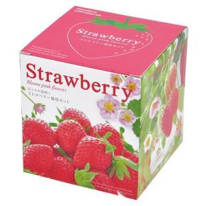 ピンクの花咲く ストロベリー栽培セット 観葉植物 ガーデニング 聖新陶芸 ギフト プレゼント 景品|arune