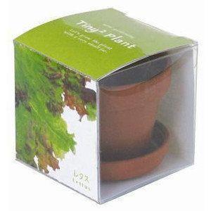 ギフトタイニィタイニィプラント TinyTiny Plant レタス 栽培セット・野菜・ハーブ|arune