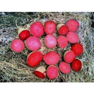 有機栽培 ビーツ 2kg 熊本県産 野菜 栄養 予約販売|asagiri-nouen|05