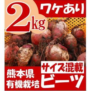 ワケあり 有機栽培 ビーツ 熊本県産 サイズ混載 2kg