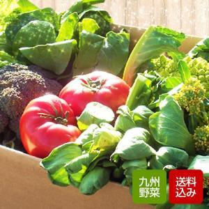 野菜セット 九州野菜10品以上 野菜詰め合わせ おまかせ野菜...