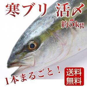 【10本限定 特別販売】  地元の漁師が太鼓判を押す寒ブリです。  肉厚で適度な脂がのり、毎日食べて...