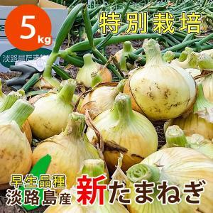5キロ 淡路島産 新たまねぎ 減農薬 特別栽培 有機肥料使用 早生品種 ★数量限定★|asahi-onion-awaji