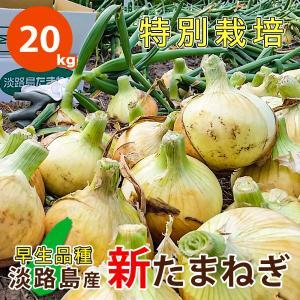 20キロ 淡路島産 新たまねぎ 減農薬 特別栽培 有機肥料使用 早生品種 ★数量限定★|asahi-onion-awaji