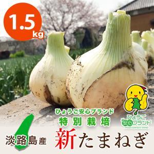 1.5キロ 淡路島産 新たまねぎ 減農薬 特別栽培 有機肥料使用 ★数量限定★|asahi-onion-awaji
