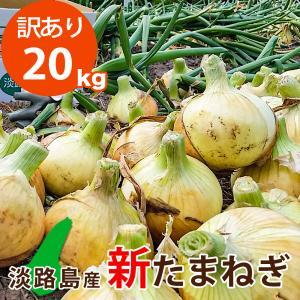 【訳あり】 20キロ 淡路島産 新たまねぎ|asahi-onion-awaji