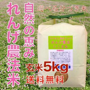 自然栽培れんげ農法玄米5kg 分づき 減農薬 選べる精米 送料無料 低温貯蔵 asahinaya-shop