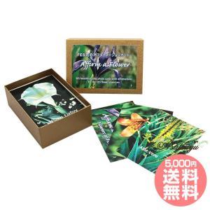 アファーメーションカード全103枚 日本語版 FESフラワーエッセンス その他|asatsuyu