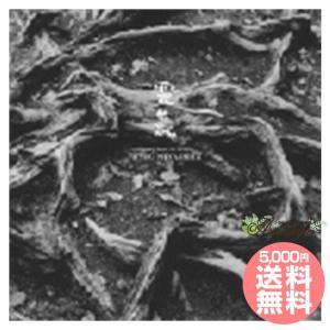 【8000円以上でサンプルプレゼント】靈氣Healing Music for REIKI ヒーリングミュージック 宮下富実夫|asatsuyu