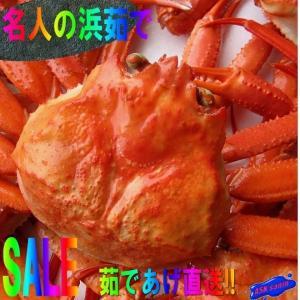 送料無料!!紅ずわい蟹Mサイズ5匹セット かに カニ