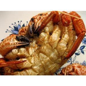 北海道産 栗蟹5杯(1kg程度) かに カニ 蟹 クリカニ くり |ask-sanin|02
