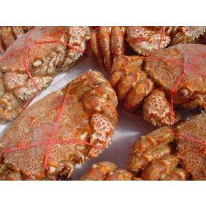北海道産 栗蟹5杯(1kg程度) かに カニ 蟹 クリカニ くり |ask-sanin|05