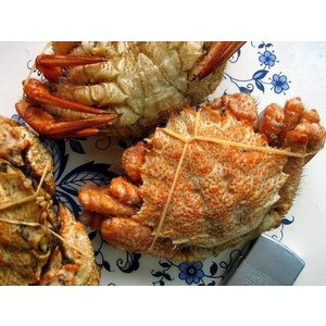 北海道産 栗蟹5杯(1kg程度) かに カニ 蟹 クリカニ くり |ask-sanin|06
