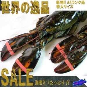 送料無料!!特大生オマール3尾セット(1匹400〜450g)