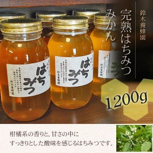 100%国産・愛知県渥美半島で採れた完熟はちみつ(みかん 1200g)|atsumi-hantou888