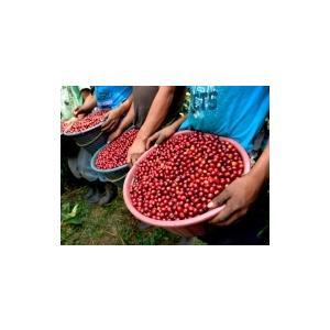 コーヒー豆 グァテマラ アンティグア 100g atsumicoffee