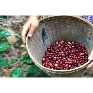 コーヒー豆 ミャンマー ハニー 100g|atsumicoffee