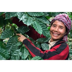 コーヒー豆 ミャンマー ハニー 300g|atsumicoffee