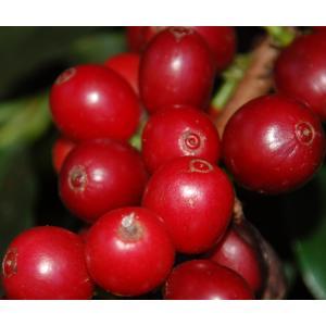 コーヒー豆 ドミニカ プリンセサワイニーナチュラル 浅煎り 300g atsumicoffee