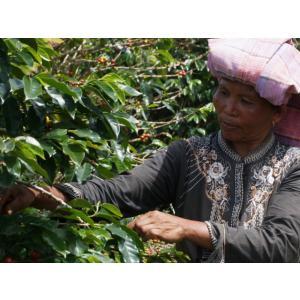 コーヒー豆 インドネシア アチェ(マンデリン)100g atsumicoffee