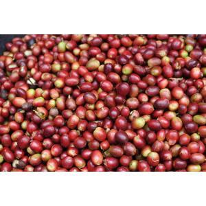 コーヒー豆 インドネシア アチェ(マンデリン)(中煎り)300g atsumicoffee