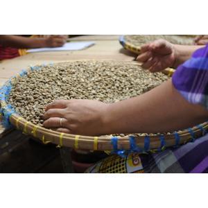 コーヒー豆 インドネシア アチェ(マンデリン)(中煎り)500g atsumicoffee