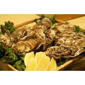 北海道仙鳳趾産・生牡蠣(カキ)特大3Lサイズ20個(殻付き 生食)/1個180〜230g|atumaru-suisan