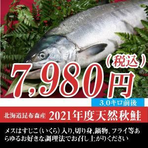 訳あり(特選)北海道(鮭)生 秋鮭 メス 生筋子 3.0キロ前後/内臓処理済み|atumaru-suisan