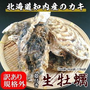 規格外ハネ牡蠣/知内産/生牡蠣(殻付き 生食)/訳あり/13kg詰(約90〜150個入)|atumaru-suisan