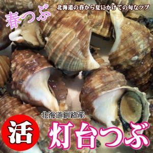 ツブ貝の産地釧路から、ボイル急速冷凍/灯台ツブ/3キロ、ツブ焼き、お刺身用/螺/簡単調理|atumaru-suisan