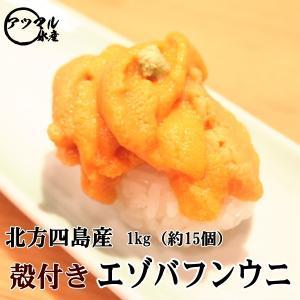 北海道 北方四島産 エゾバフンウニ 1kg 約15個入 (うに ウニ)生うに 殻付き|atumaru-suisan