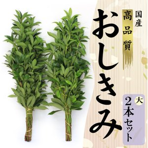 生花のしきみ しきび 大(80cm)2束セット 樒 花しば ハナシバ