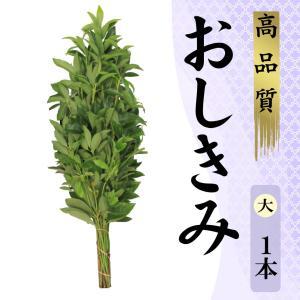 ・サイズ 全長 80cm程度  シキミはもともと神聖な木で、その枝葉には強い芳香があり、死臭を和らげ...