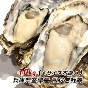 朝採れ 牡蠣 訳あり 殻付き牡蠣 10kg カキ かき 兵庫県 御津産 室津産 加熱用 バーベキュー 牡蠣フライ 牡蠣鍋 取り寄せ 産地直送 送料無料|awajikodawari