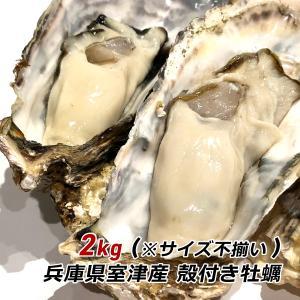 朝採れ 牡蠣 訳あり 殻付き牡蠣 2kg カキ かき 兵庫県 御津産 室津産 加熱用 バーベキュー 牡蠣フライ 牡蠣鍋 取り寄せ 産地直送 送料無料|awajikodawari