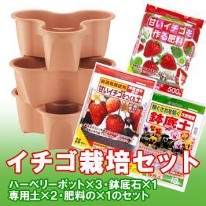 イチゴ栽培セット