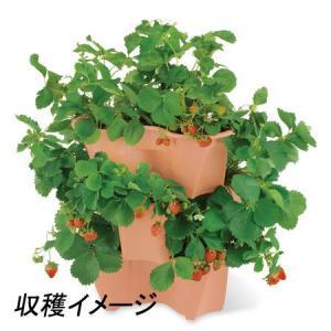 イチゴ栽培セット(ハーベリーポット)|ayahadio|02