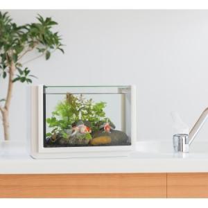 【コトブキ ペット アクア 水槽】 【仕様】 ●製品寸法:W320×D180×H220 ●水量:約1...