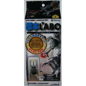 フジコン 標本LABO|ayahadio