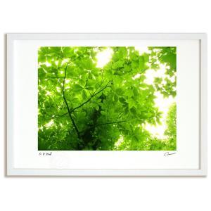 アートフォト 絵画 壁掛け 世界遺産 白神山地 ブナの木の木漏れ日 インテリア 壁掛け 額入り アート アートパネル モダン アートフレーム おしゃれ