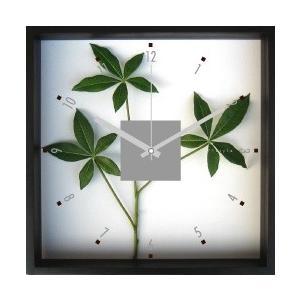 掛時計/Pachia glabra(パキラ)/ウォールクロック インテリア 壁掛け ギフト プレゼント 新築祝い おしゃれ アート|ayuwara