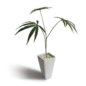 人工観葉植物・造花/Cannabis sativa(ヘンプ/大麻)/絵画 壁掛け 壁飾り インテリア 油絵 花 アートパネル ポスター 絵 額入り リビング 玄関|ayuwara