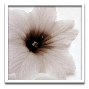 フォトフレーム/jk driggs Blossom[Three](ブロッサム3)/壁掛け 立てかけ 記念 写真 飾り 出産祝い 結婚祝い 写真立て ayuwara