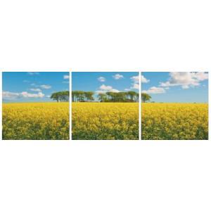 アートフレーム ND Concept Frame 3枚set 菜の花畑/絵画 壁掛け 壁飾り インテリア 油絵 花 アートパネル ポスター 絵 額入り リビング 玄関|ayuwara
