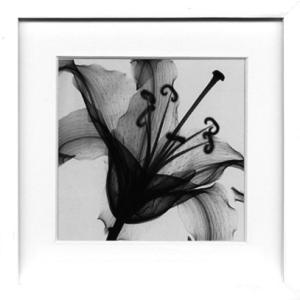 レントゲンアート 絵画/リリー ミュスカデ/絵画 壁掛け 壁飾り インテリア 油絵 花 アートパネル ポスター 絵 額入り リビング 玄関|ayuwara