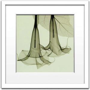 レントゲンアート 絵画/ダチュラ/絵画 壁掛け 壁飾り インテリア 油絵 花 アートパネル ポスター 絵 額入り リビング 玄関|ayuwara